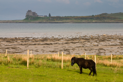 The kelpie, Scotland's mythical water horse